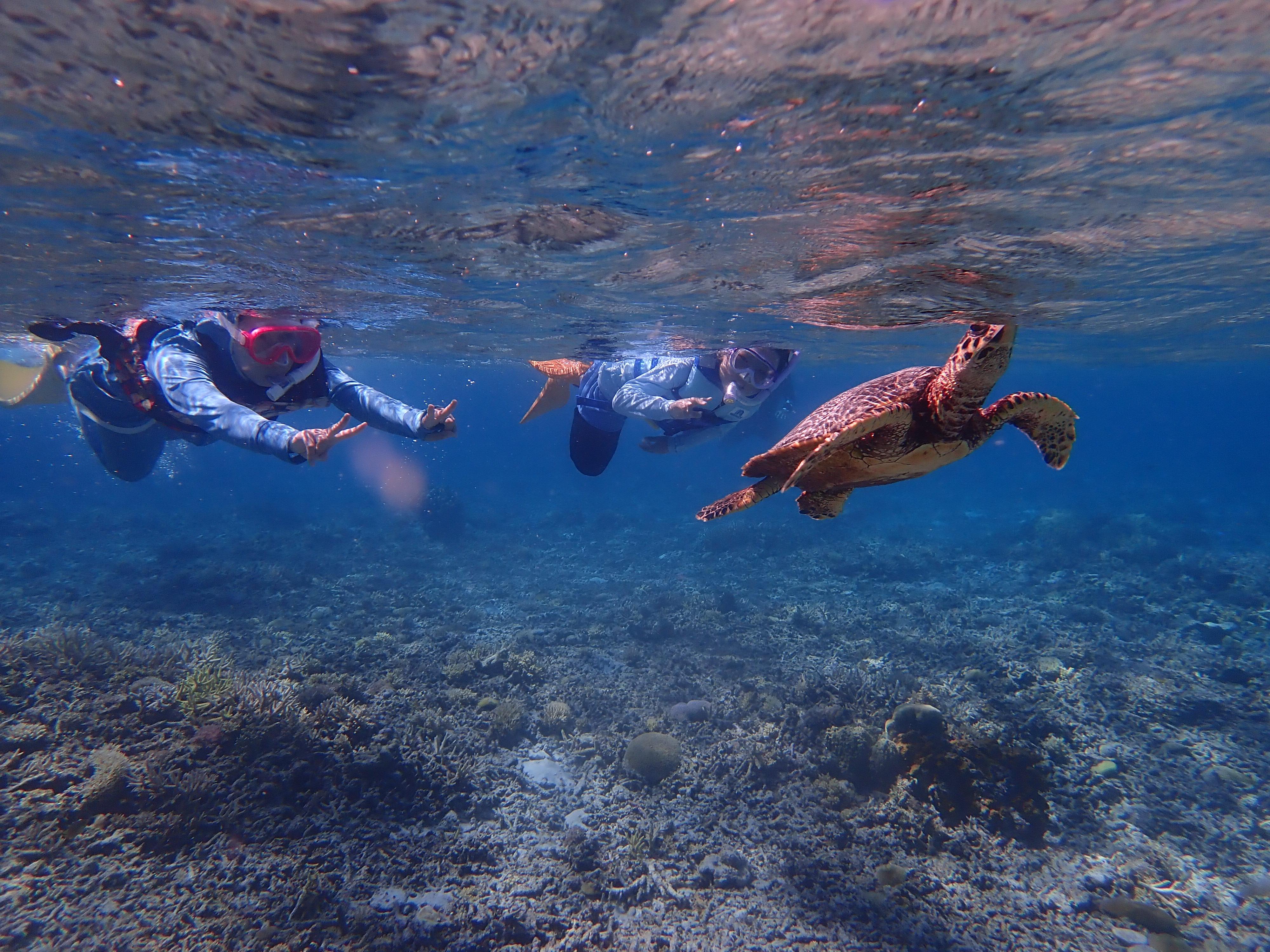 ウミガメと泳ぐ